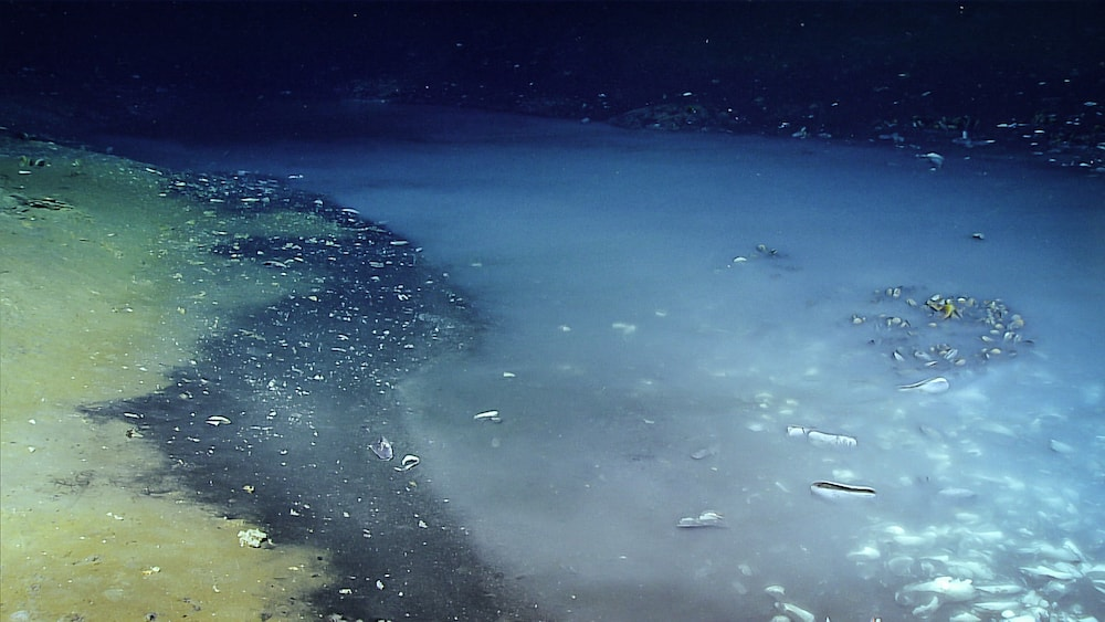 a brine pool at the bottom of the ocean that looks a lot like fog settling but is really super saline water