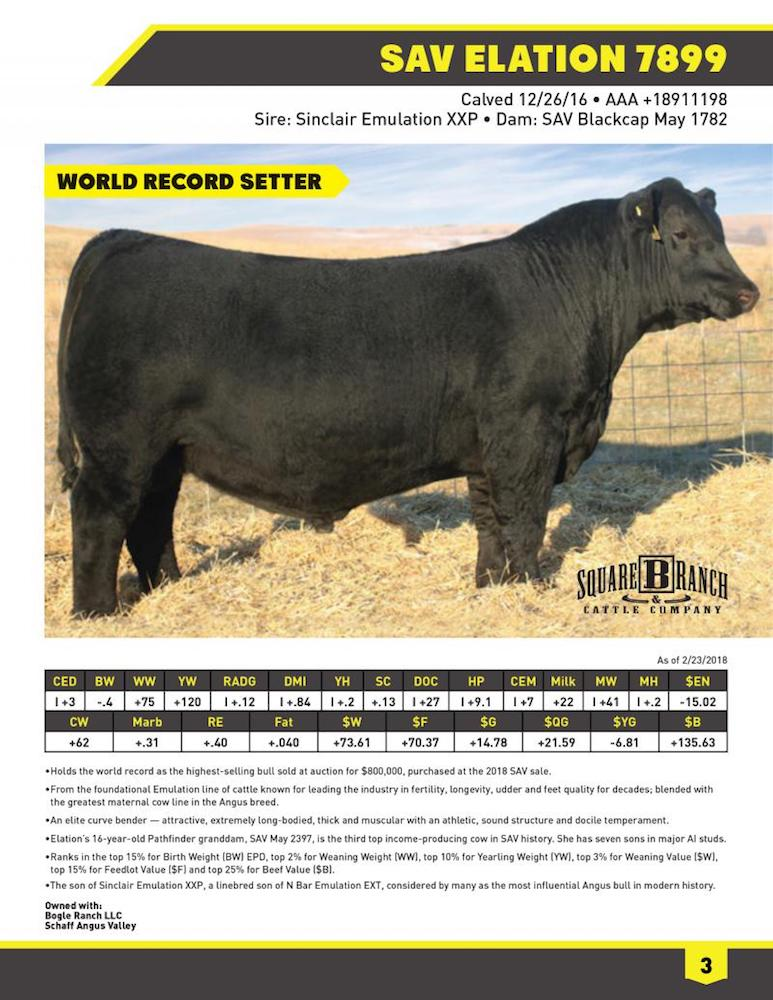 infographic bull showing world record setter for highest selling bull