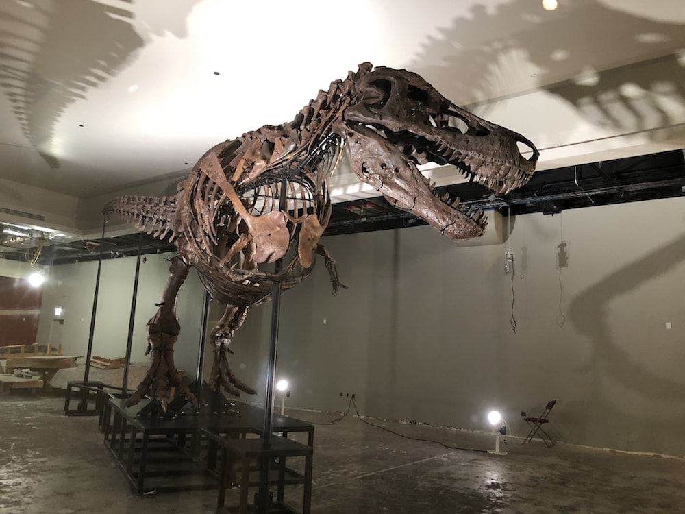 a large full skeleton of a tyrannosaurus rex in a warehouse in a museum