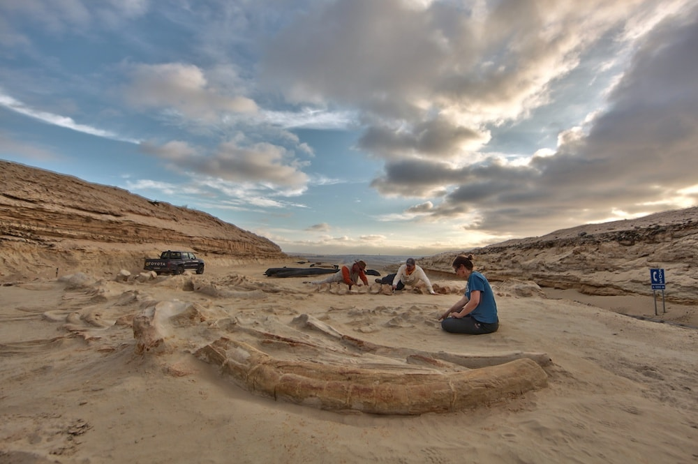 a group of paleontologists sitting on the ground next to the whale bones, uncovering them under a blue cloudy sky