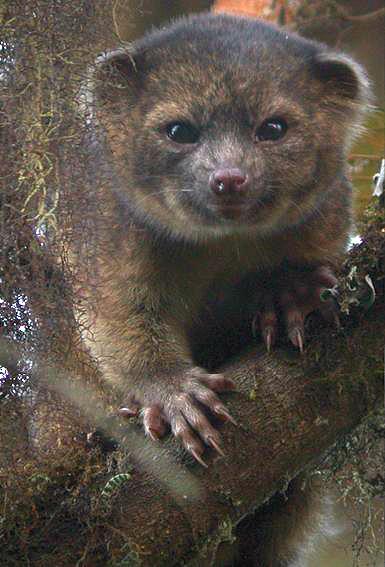 a furry four-legged creature in a tree