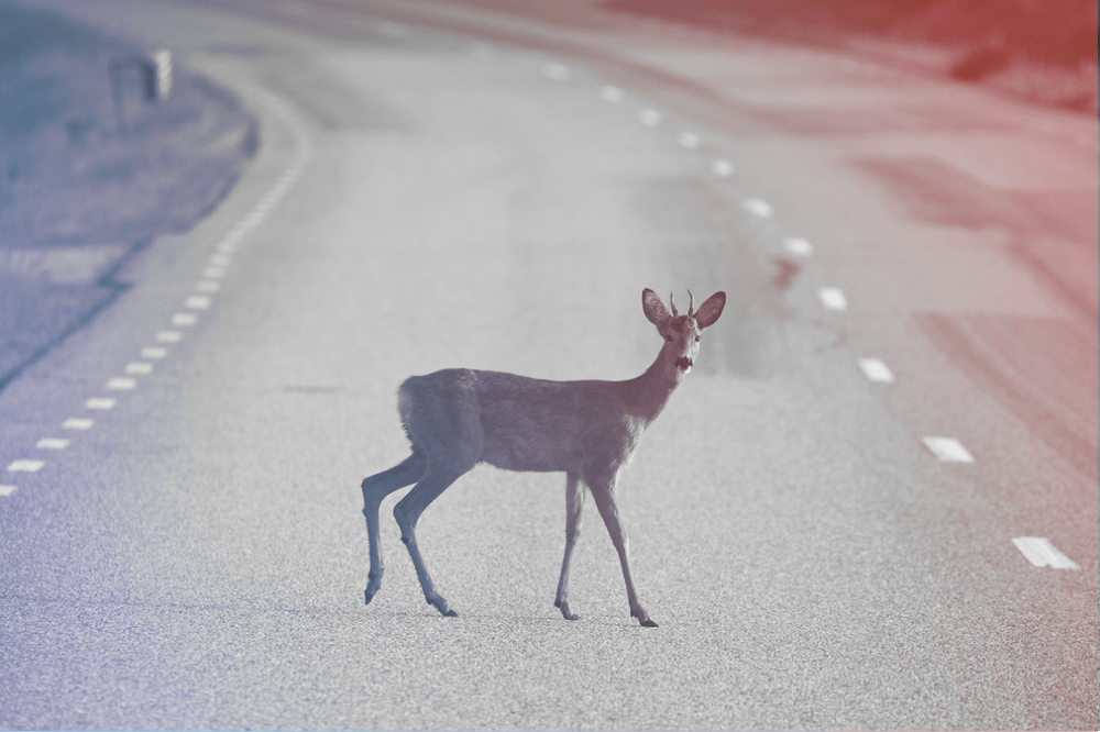 deer standing in road with red and blue filter