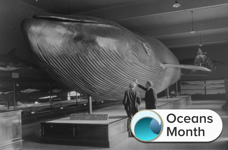 black and white photograph of a model of a whale with two men observing it