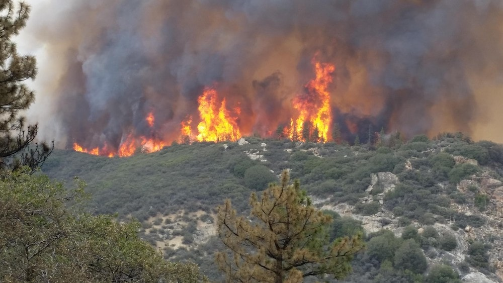 large flames from forest fire at the top of a hill