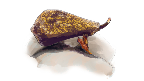 How Do 'Killer Snails' Kill Their Victims?