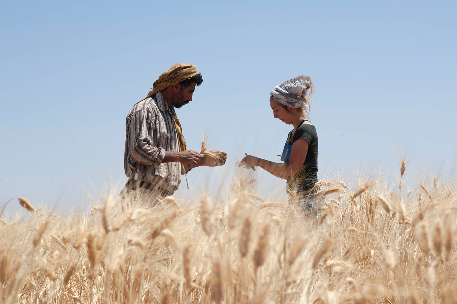 Man and woman standing in field of wheat