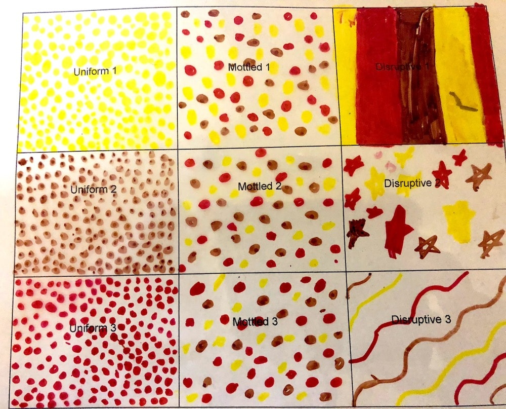 a sheet with nine different boxes all colored in with different cephalopod skin patterns