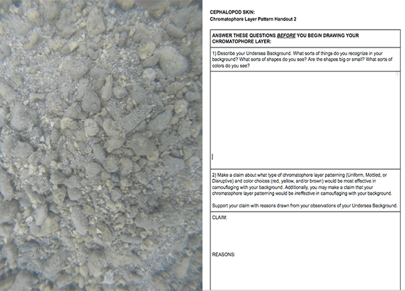 sea bed that is gray and a screenshot of a worksheet
