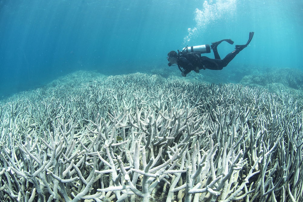 diver swimming above an expanse of bleached white coral
