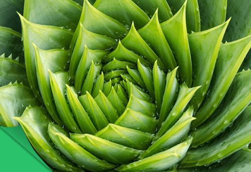 Data graph view of the fibonacci series example.   download.