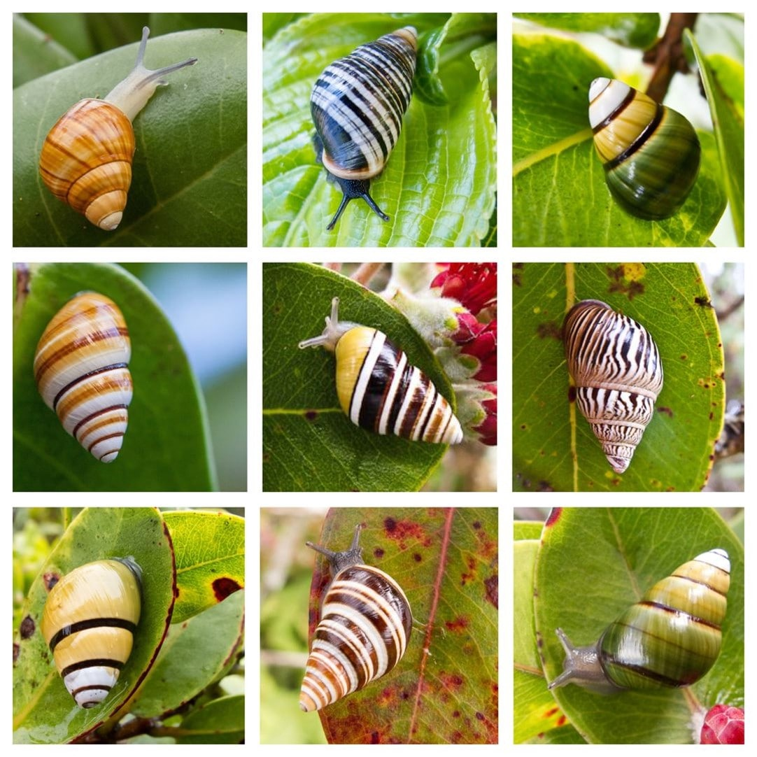 Color snails on trees
