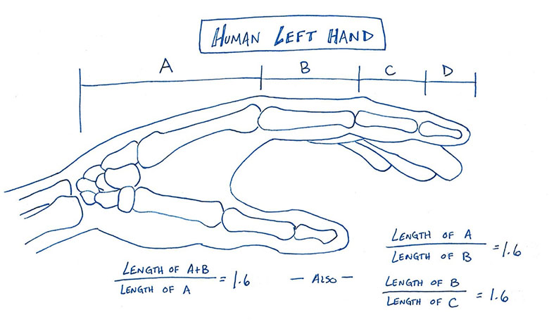 A side view drawing of a human left hand measured into segments A, B, C, and D demonstrating that the bones in the human hand closely resemble the Fibonacci Sequence