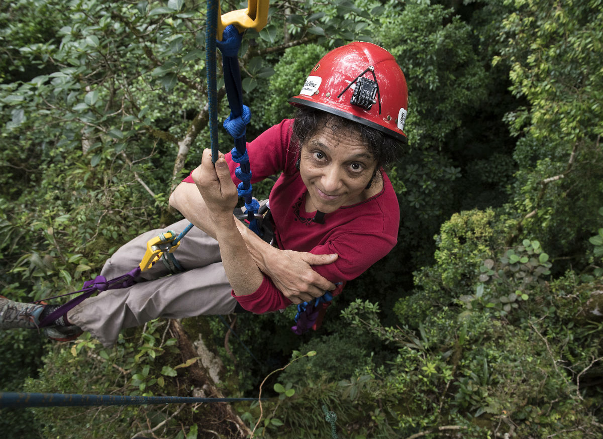 Nalini Nadkarni suspended in the forest canopy wearing a hard hat in Monteverde, Costa Rica