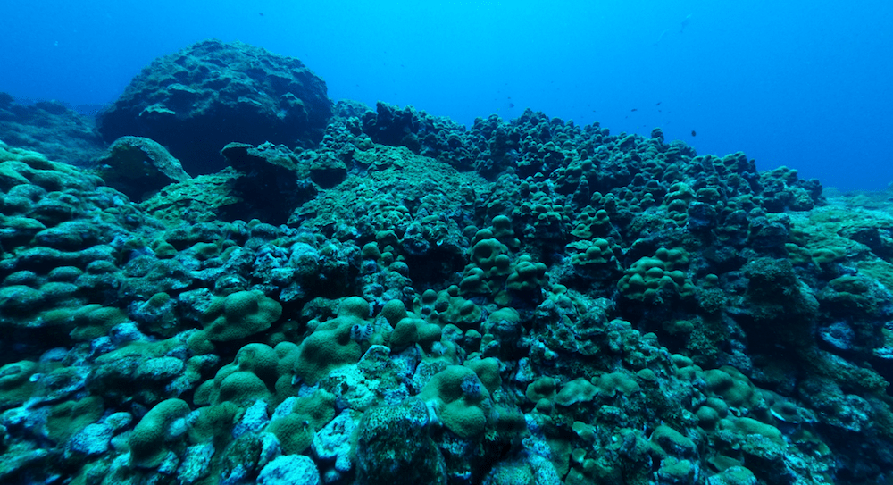 a field of corals with varying colors