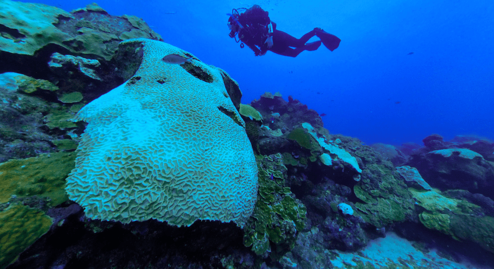 a field of coral, with lots of bone white corals