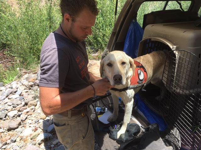 a man putting a harness on a yellow lab standing in the trunk of an suv