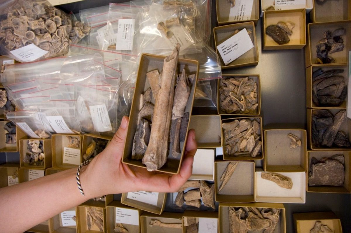 a bunch of boxes with small bones and specimens in them. a hand holds out one particular box with a large long bone