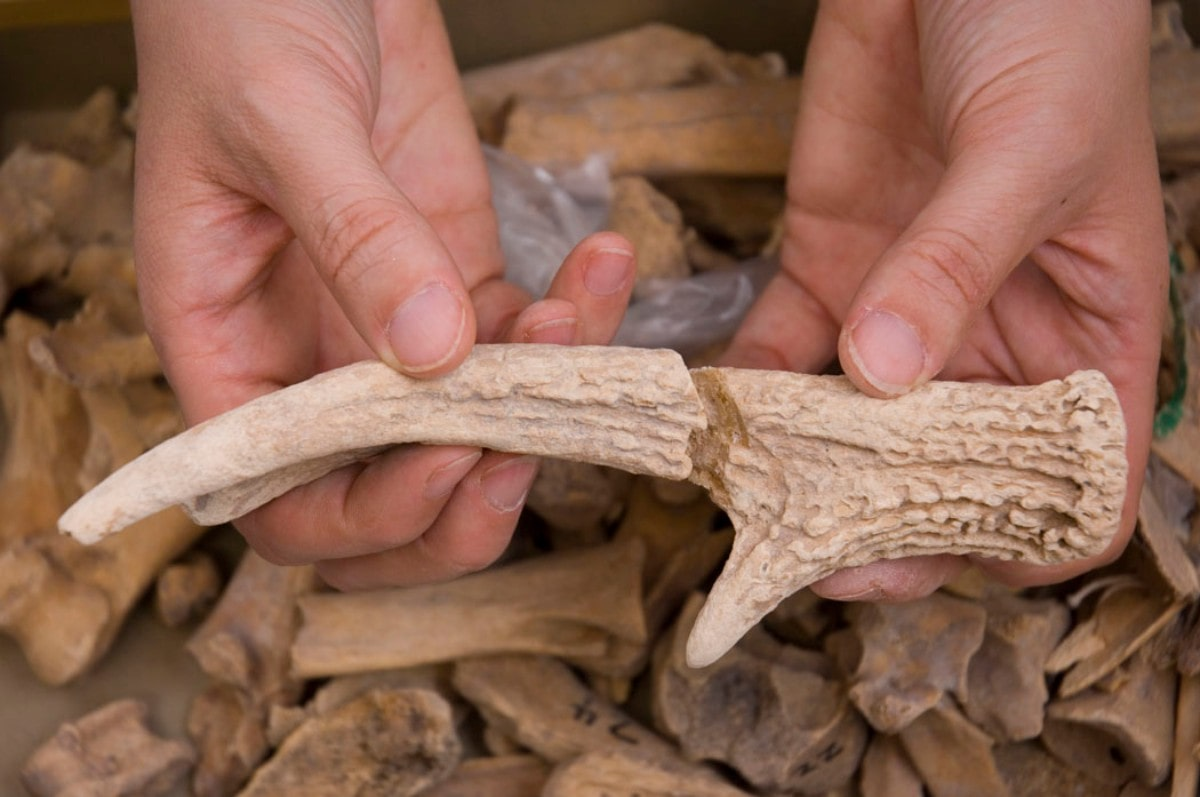 two hands holding out two pieces of a deer antler