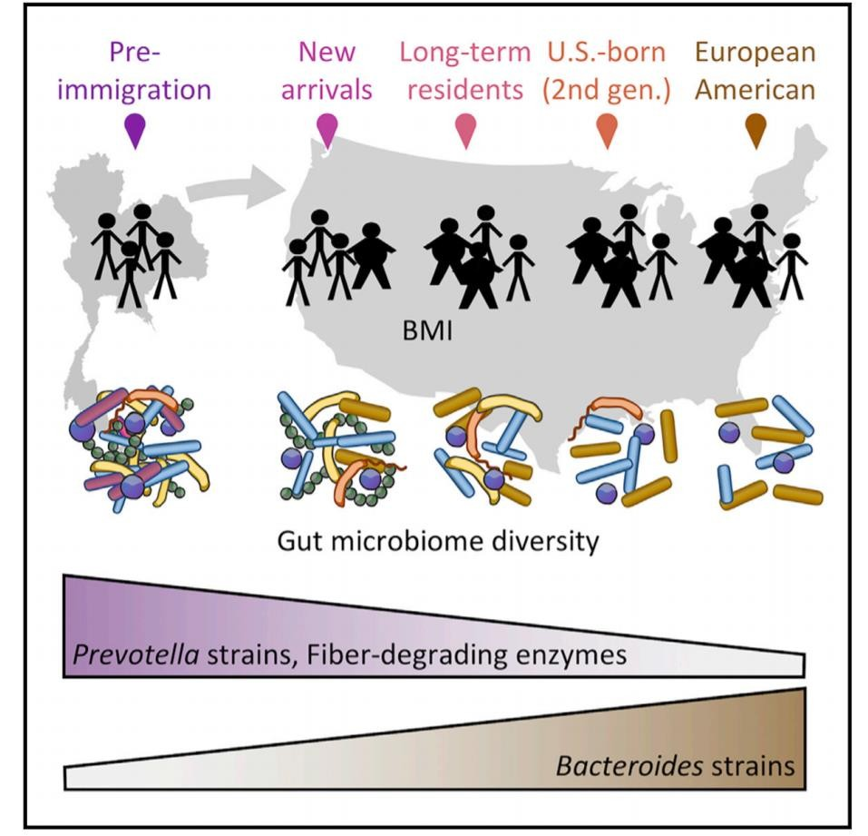 graphic that shows outline of thailand on left and outline of U.S. on right. as the graphic moves left to right there are five groups of stick figures, each representing the next generation. below them are colorful, diverse representations of their gut microbiome. as the graphic moves right, the amount of these microbes decrease along with the different types of microbes