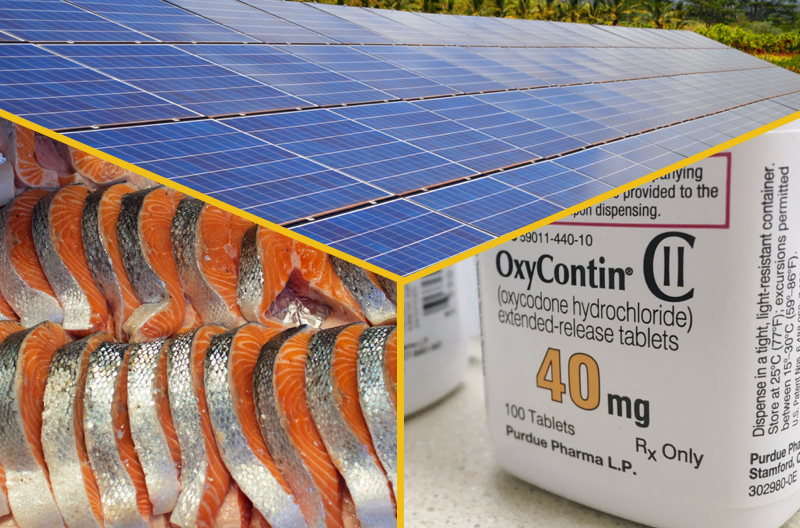 "three images, of solar panels, salmon at a fish market, and a pill bottle labeled ""oycontin"""