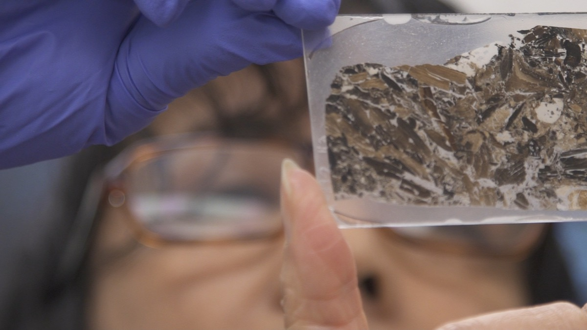 a close up of a thin slice of rock in a slide that a woman wearing glasses examines