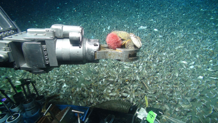 ROV arm picking up a sample