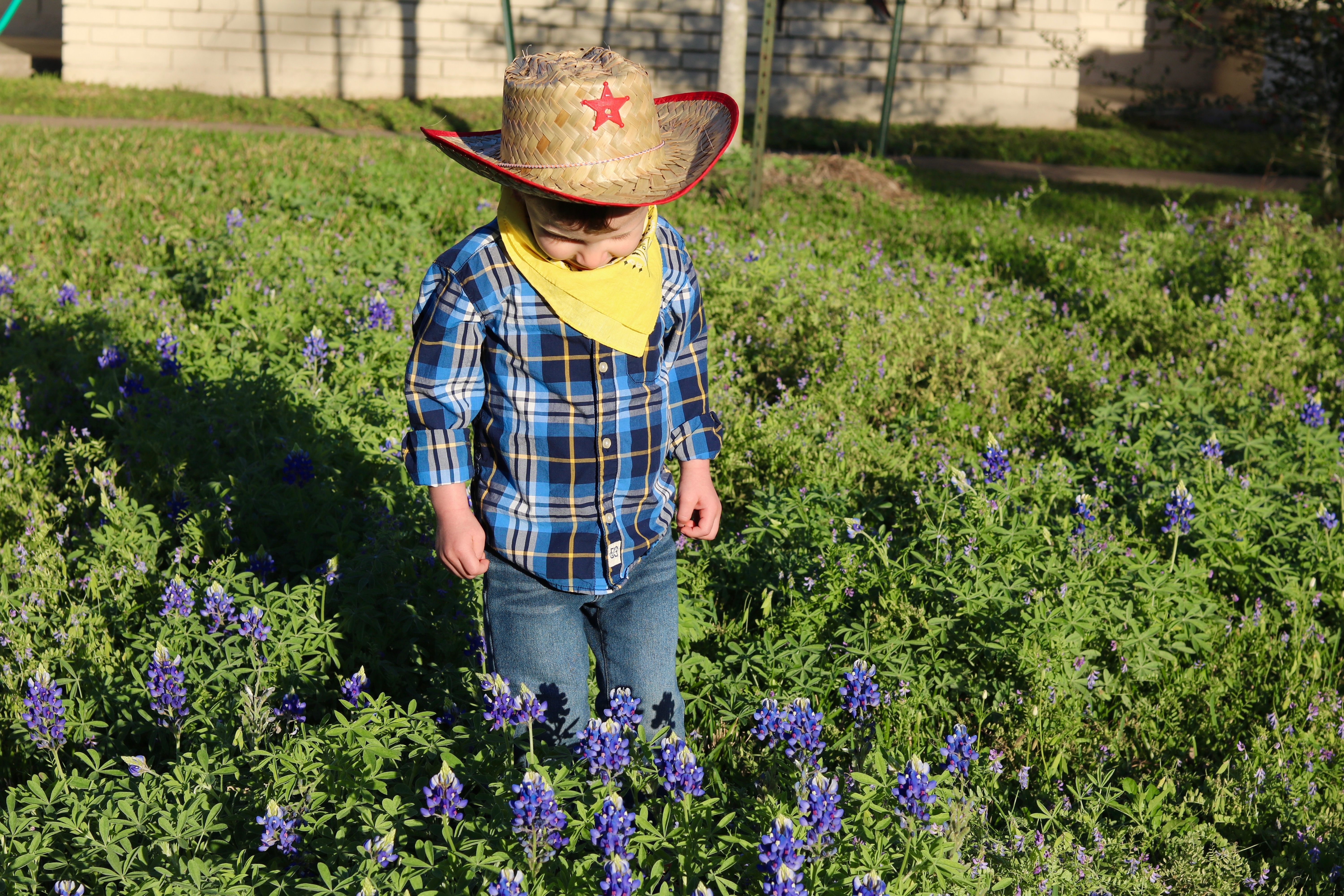 a toddler looks at a small unmowed lawn with purple flowers. he is dressed in a cowboy hat and very cute