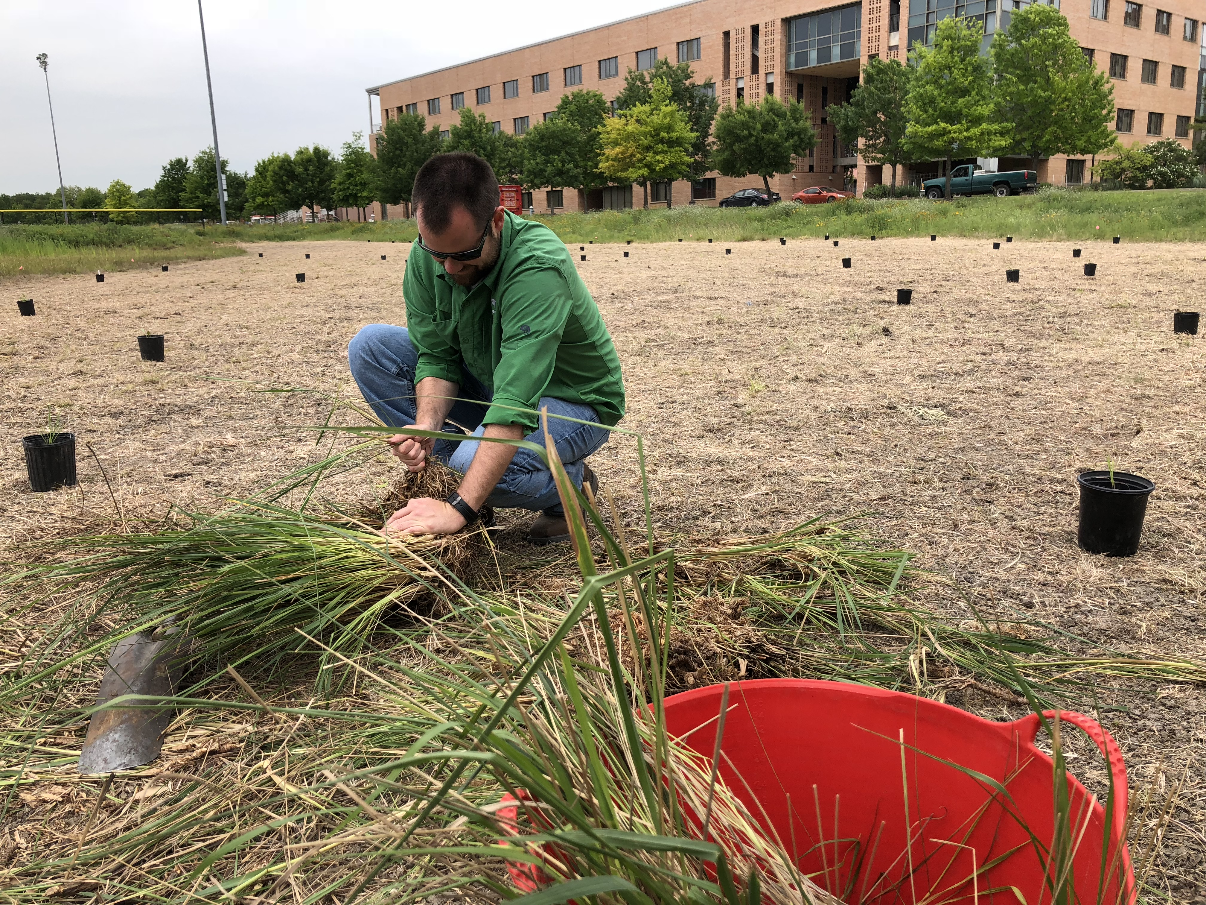 a man in a green shirt kneels on the ground while he plants some native plants