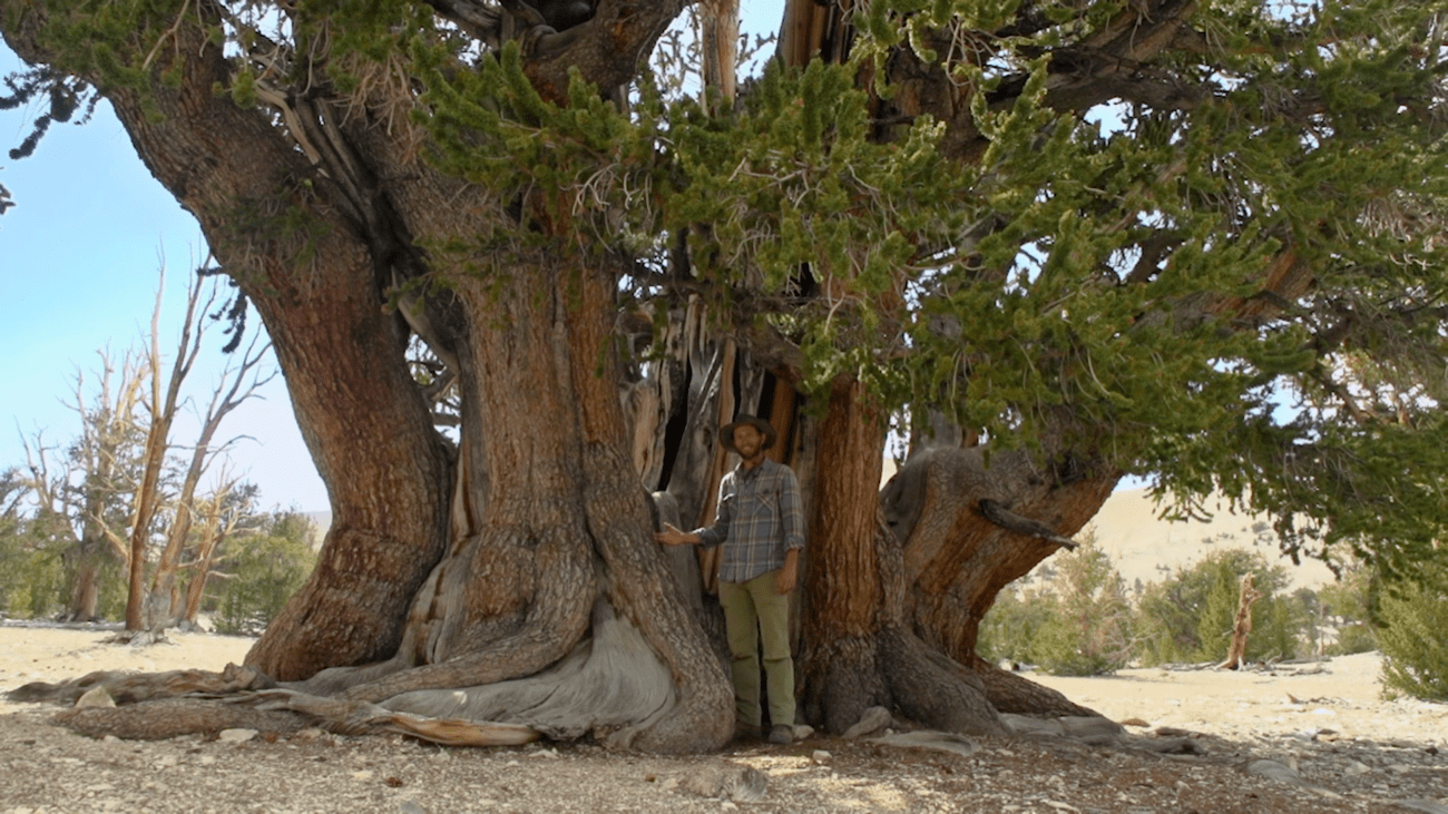 a man in hiking clothes stands in front of a very large tree