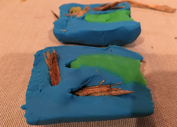 pieces of bark added to the cross section of play doh