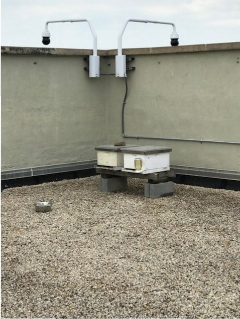 two small behives on a gravelly roof with two security cameras on the edge