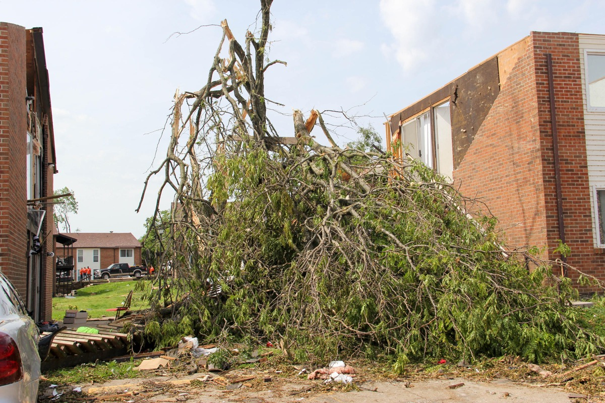 A tree snapped in half between two damaged buildings