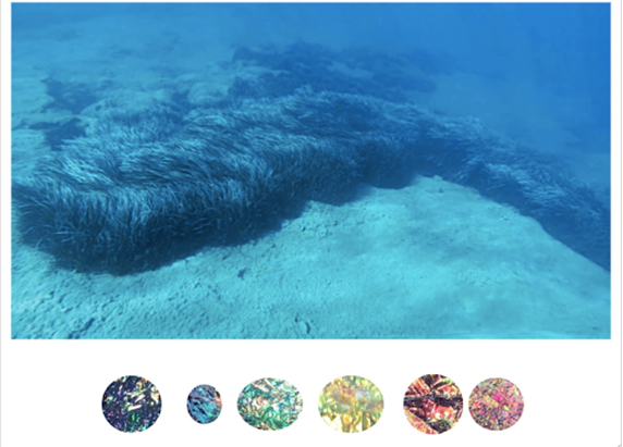 an image of a seafloor with lush thick seaweed. below are the six colorful circles