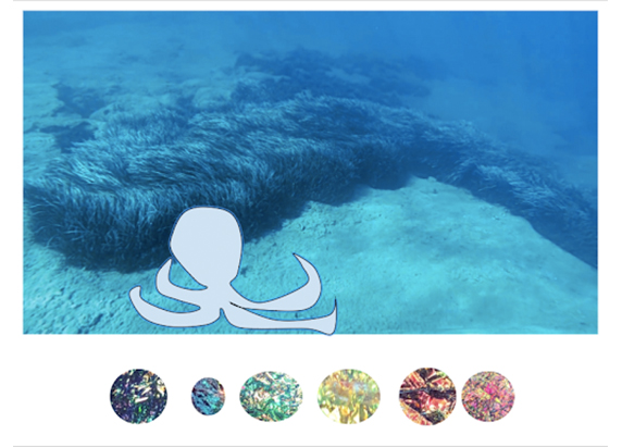 an image of lush seafloor and a rough line drawing of an octopus. six colorful circles are below it