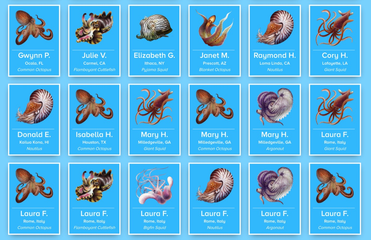 a screenshot of a bunch of blue tiles of illustrated cephalopods with the first names and locations of donors who sponsored the cephalopod