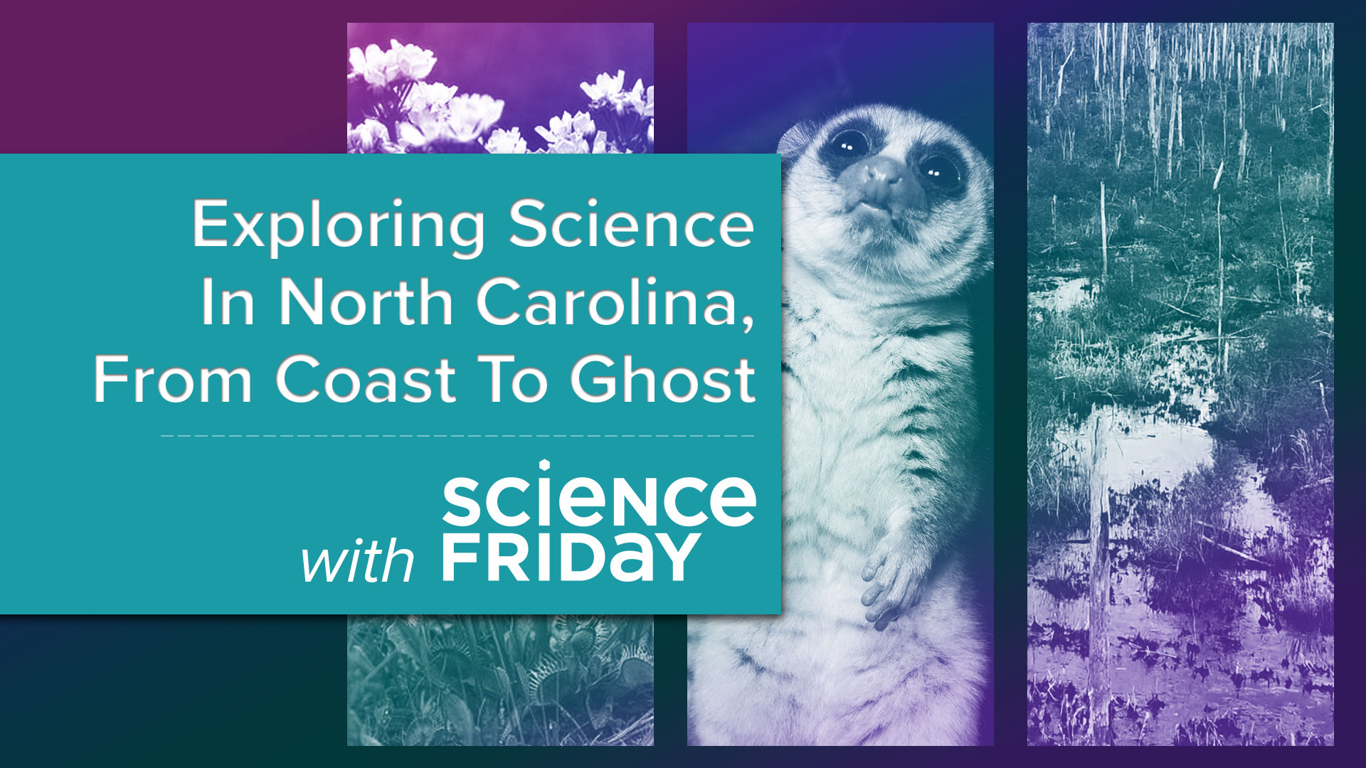 three images of flowers, a lemur, and a swamp with text 'Exploring Science in North Carolina, from coast to ghost'