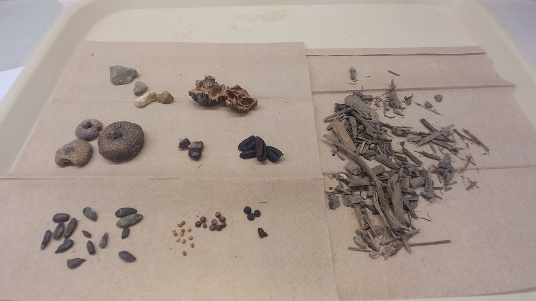 scattered rocks and plant residue and also some twigs and wooden pieces lying scattered across a brownish sheet