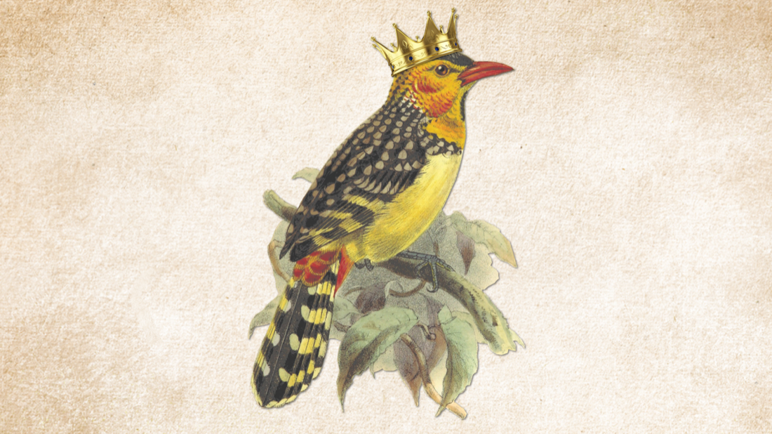 colorful yellow bird watercolor on yellowed paper background. the bird is wearing a perfect crown