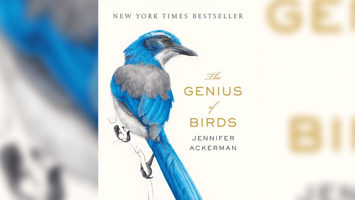 Mapping The Mind Of The Genius Bird