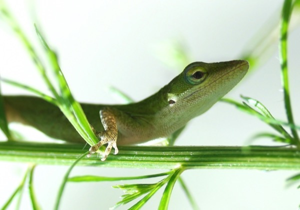 a small green lizard perched on a green branch