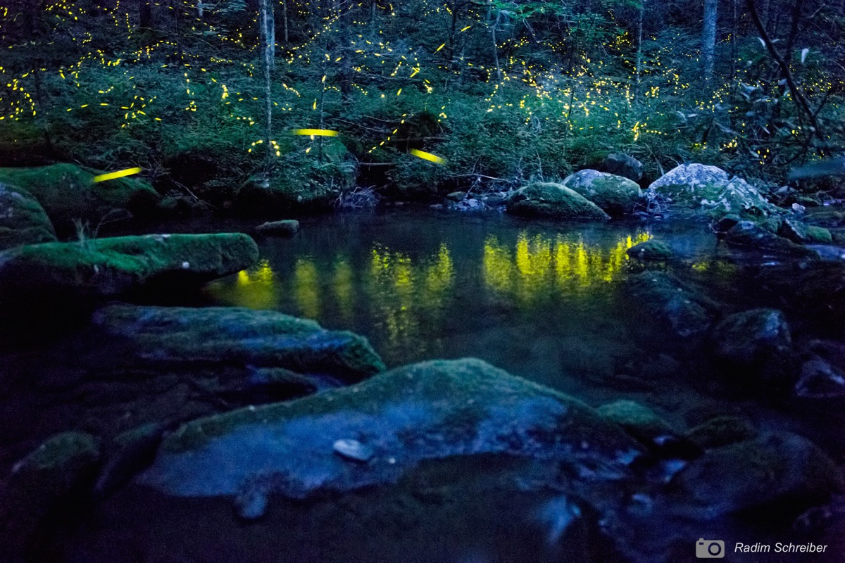 a lake at night with glowing yellow lights from fireflies
