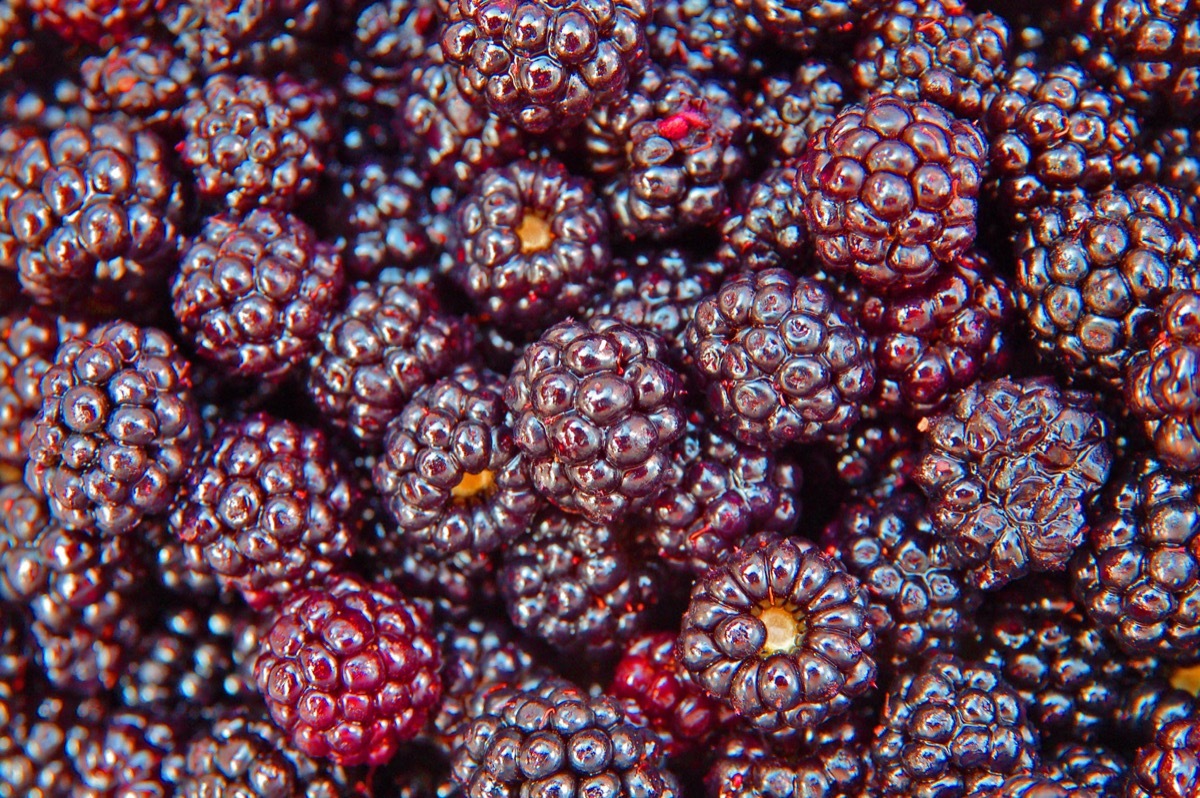 a close-up on a juicy pile of blackberries