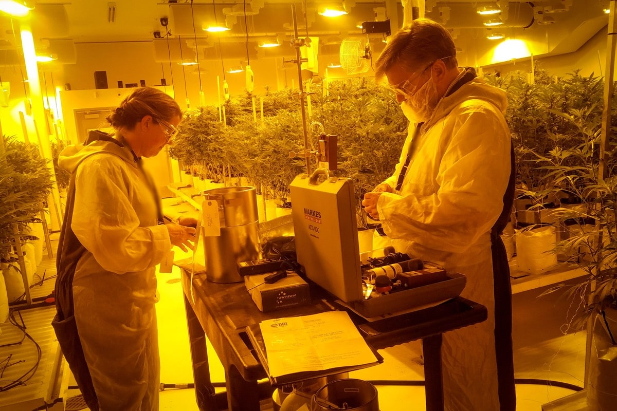 two people in labcoats standing in marijuana farm lab