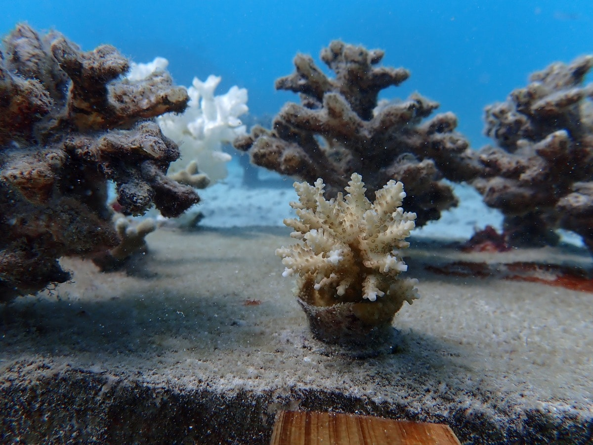 little plots of corals on a table for an experiment. these corals are 3d printed