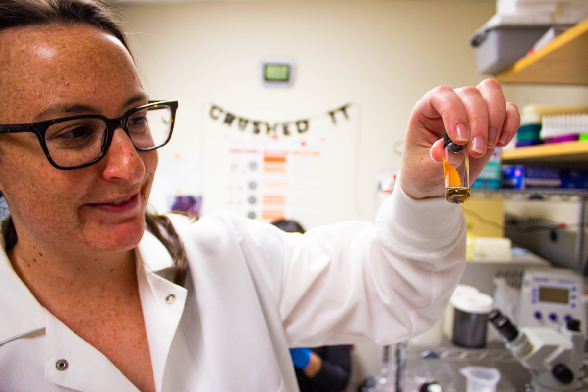 a scientist holds a small vial filled with a yellow liquid and tick guts