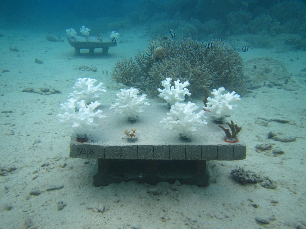 white corals on a table on the bottom of the ocean for an experiment