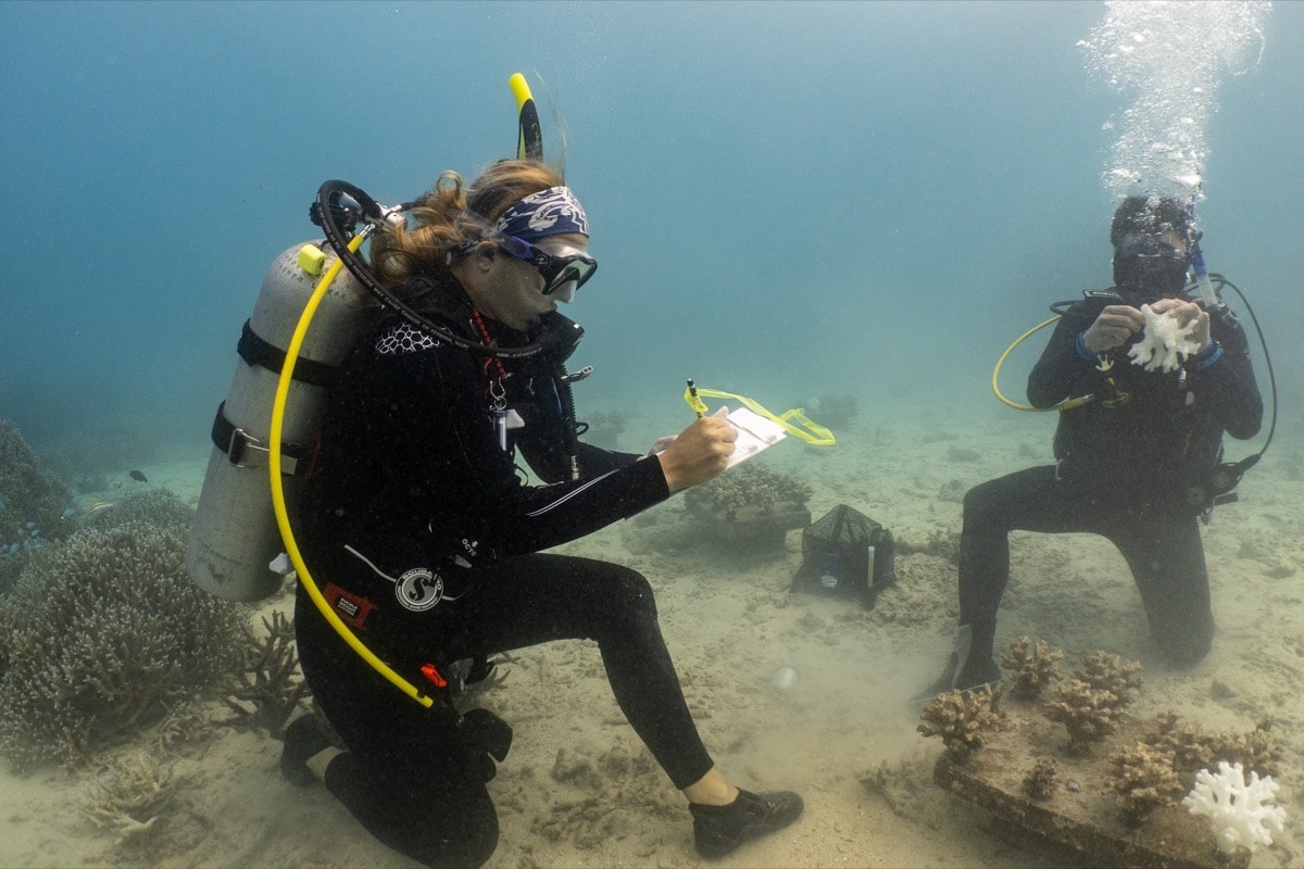 two researchers underwater in the ocean with scuba gear document what is happening to their coral experiment