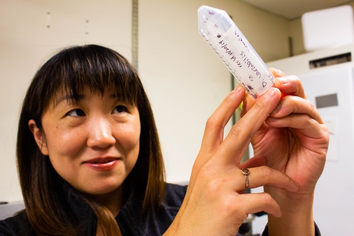 seemay chou, a tick researcher is examining a test tube full of ticks