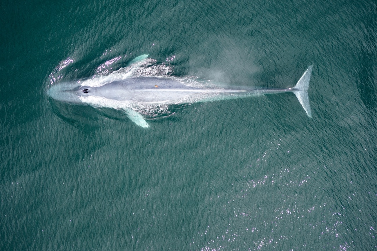 Why Whales Are So Big