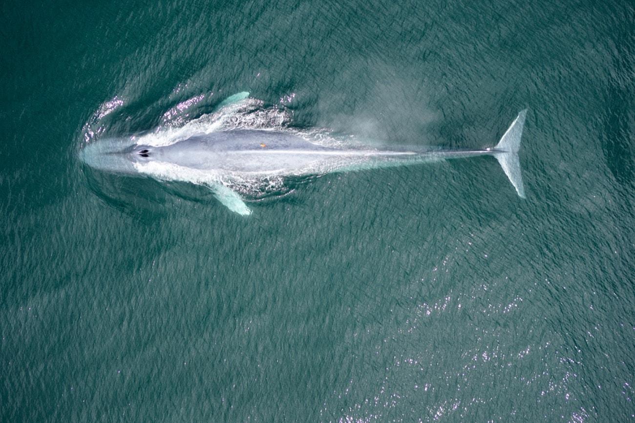 an overhead shot of a whale